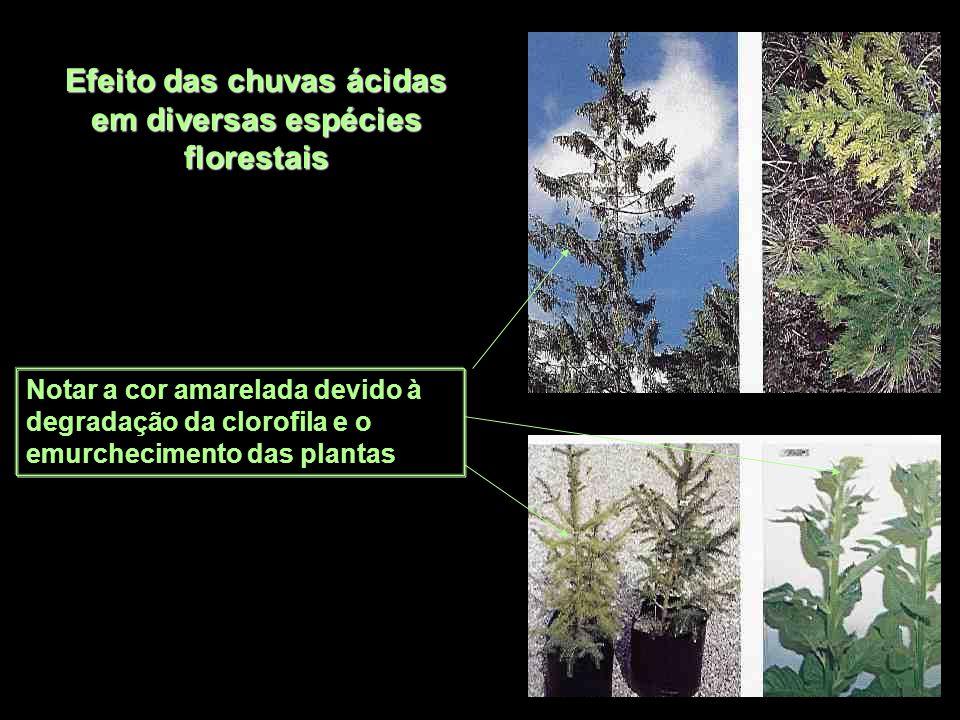 Efeito das chuvas ácidas em diversas espécies florestais Notar a cor amarelada devido à degradação da clorofila e o emurchecimento das plantas