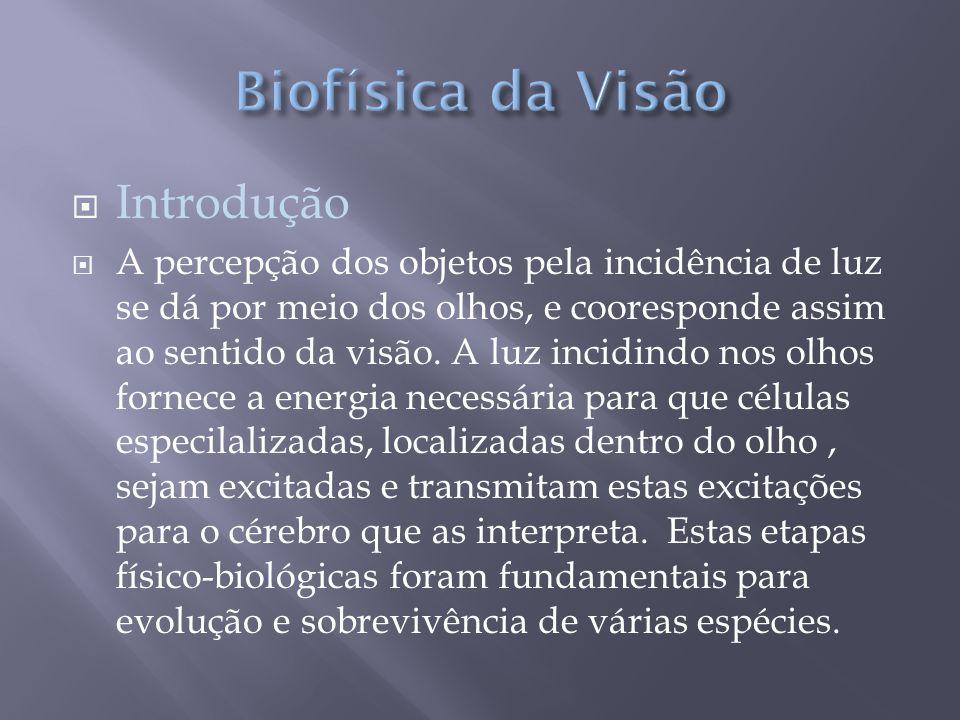  Introdução  A percepção dos objetos pela incidência de luz se dá por meio dos olhos, e cooresponde assim ao sentido da visão.