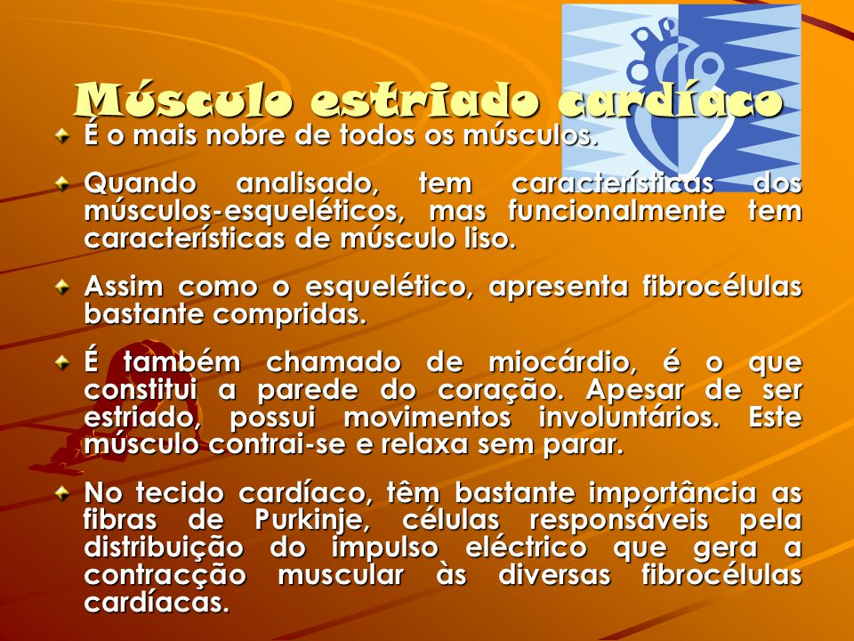 Músculo estriado cardíaco É o mais nobre de todos os músculos. Quando analisado, tem características dos músculos-esqueléticos, mas funcionalmente tem