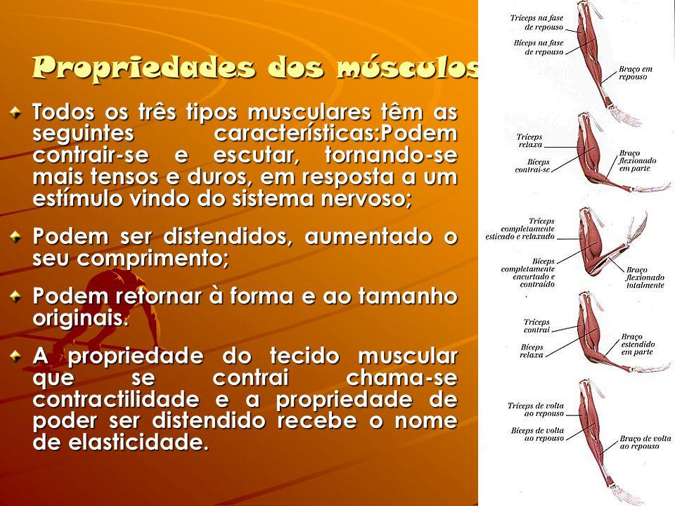 Propriedades dos músculos Todos os três tipos musculares têm as seguintes características:Podem contrair-se e escutar, tornando-se mais tensos e duros