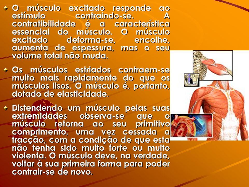 O músculo excitado responde ao estímulo contraindo-se. A contratibilidade é a característica essencial do músculo. O músculo excitado deforma-se, enco