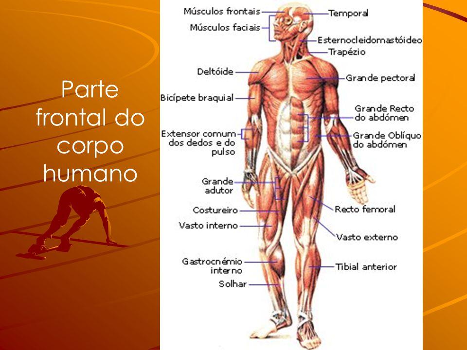 Parte frontal do corpo humano