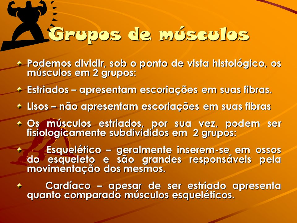 Grupos de músculos Podemos dividir, sob o ponto de vista histológico, os músculos em 2 grupos: Estriados – apresentam escoriações em suas fibras. Liso