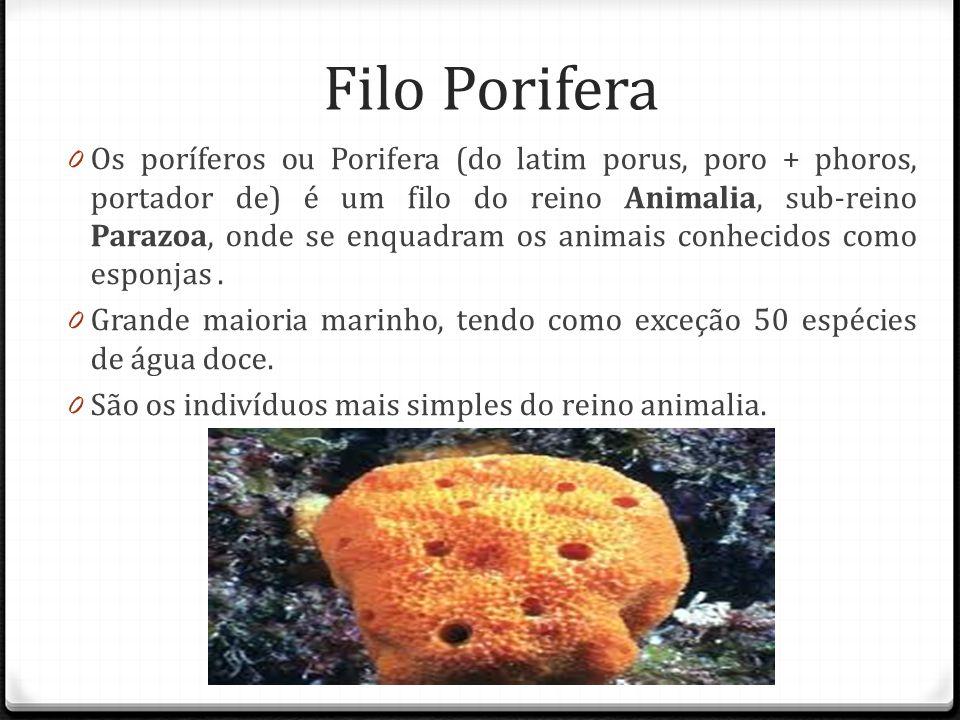 Filo Porifera 0 Os poríferos ou Porifera (do latim porus, poro + phoros, portador de) é um filo do reino Animalia, sub-reino Parazoa, onde se enquadram os animais conhecidos como esponjas.