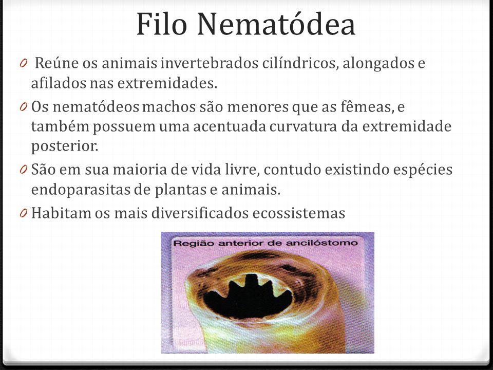 Filo Nematódea 0 Reúne os animais invertebrados cilíndricos, alongados e afilados nas extremidades.
