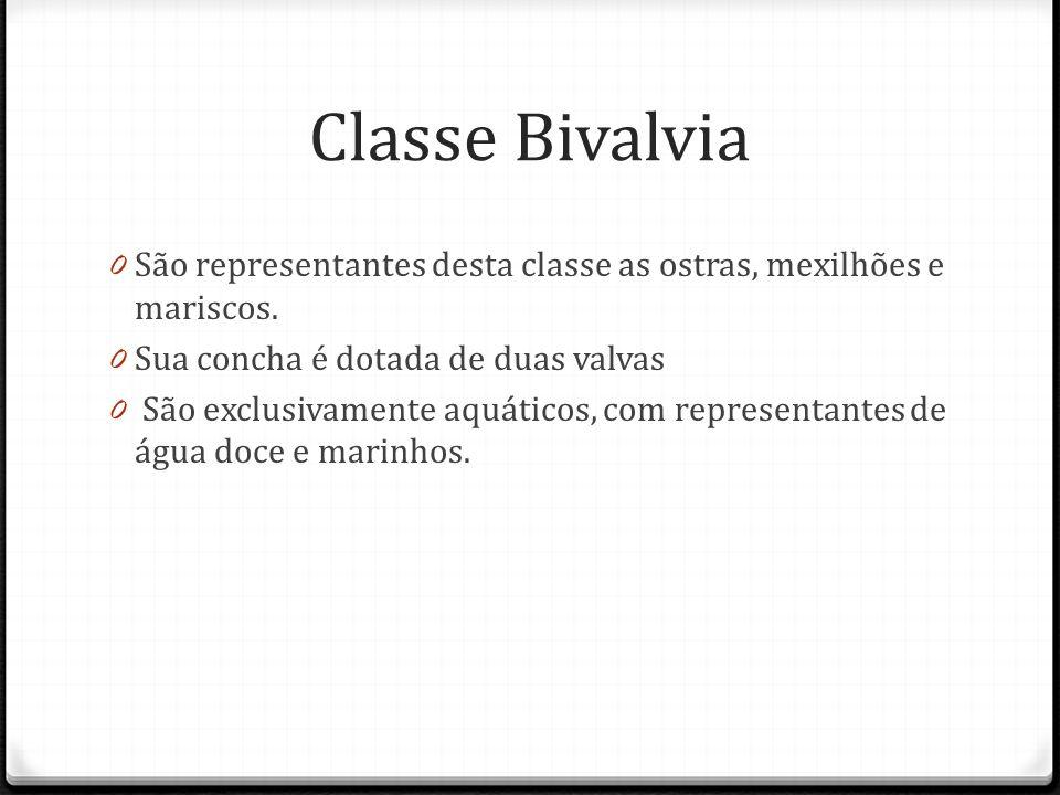 Classe Bivalvia 0 São representantes desta classe as ostras, mexilhões e mariscos.