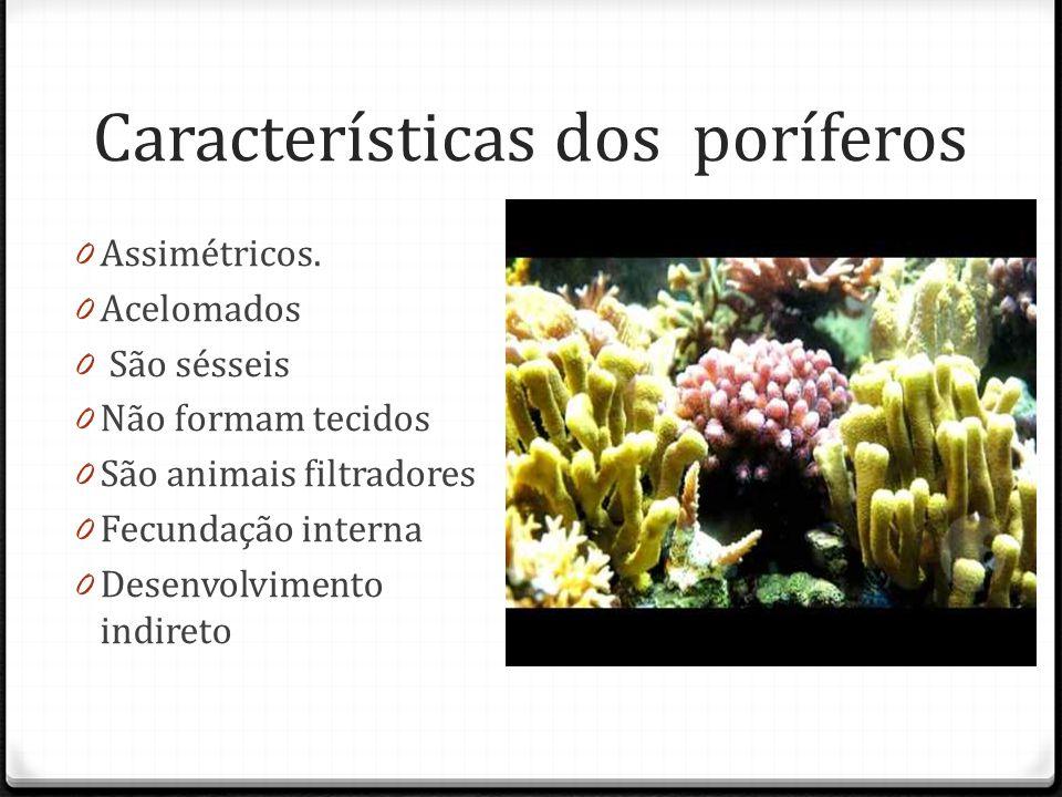 Características dos poríferos 0 Assimétricos.