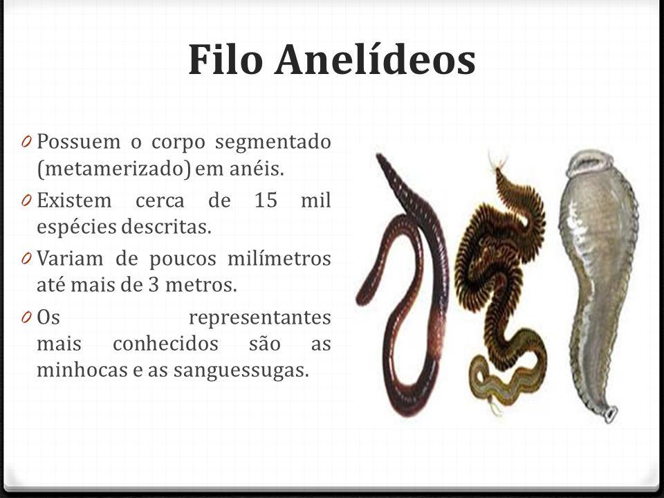 Filo Anelídeos 0 Possuem o corpo segmentado (metamerizado) em anéis.