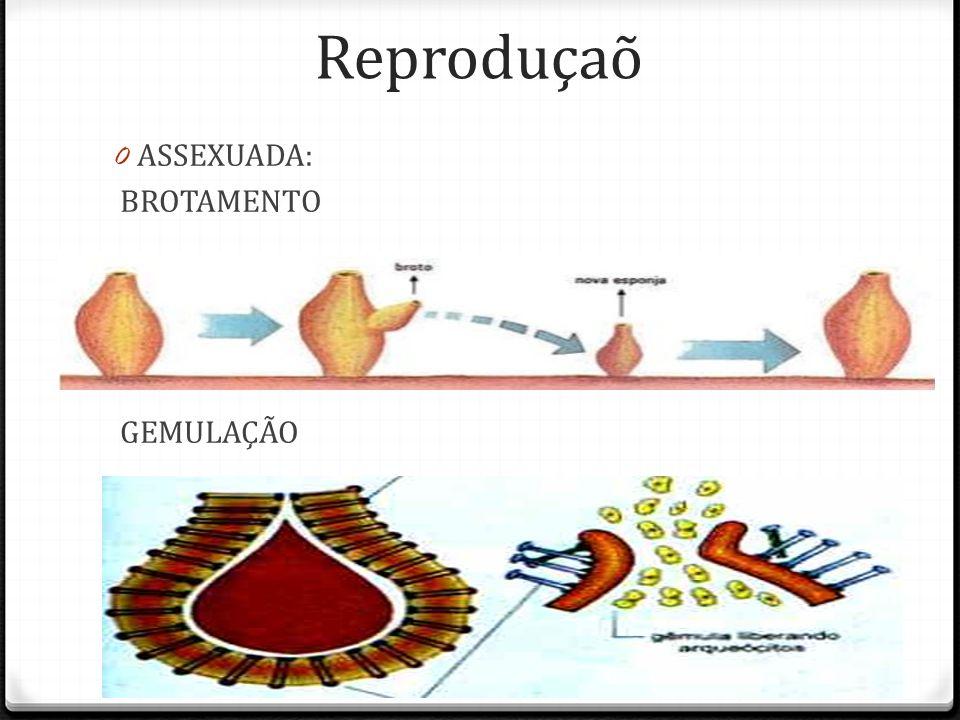 Reprodução 0 Varia de acordo com a espécie.0 Muitos são hermafroditas.