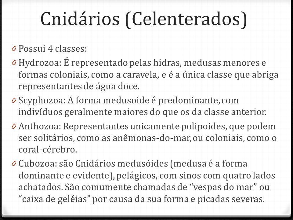 Cnidários (Celenterados) 0 Possui 4 classes: 0 Hydrozoa: É representado pelas hidras, medusas menores e formas coloniais, como a caravela, e é a única classe que abriga representantes de água doce.