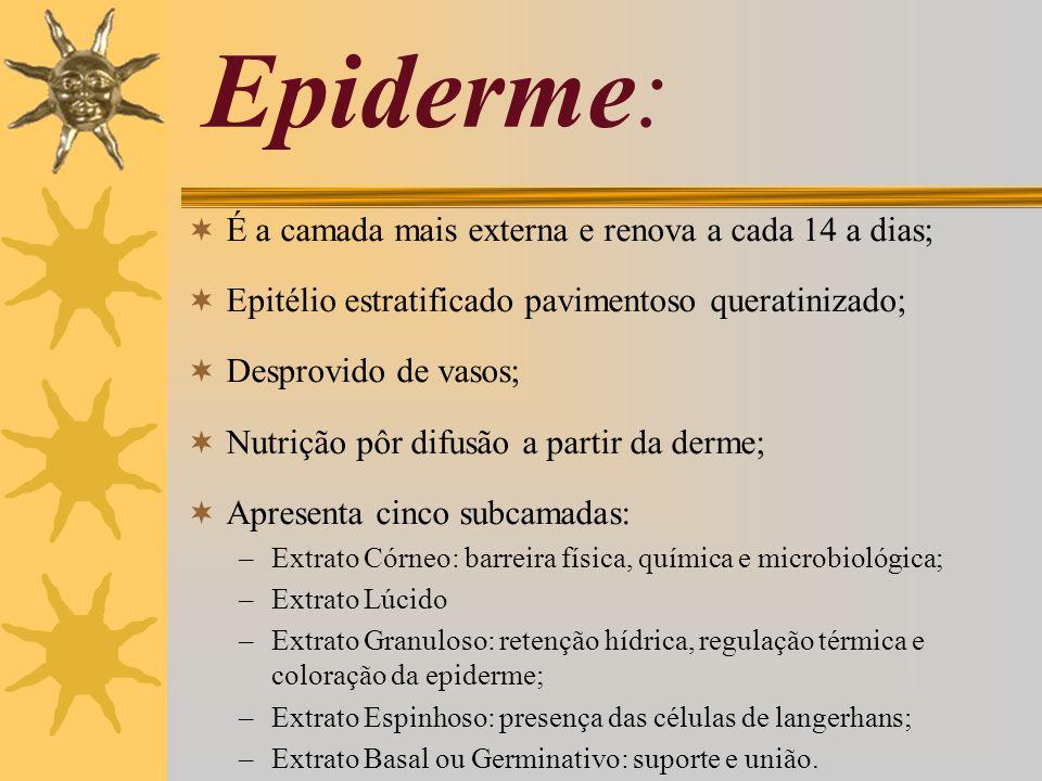 Epiderme: