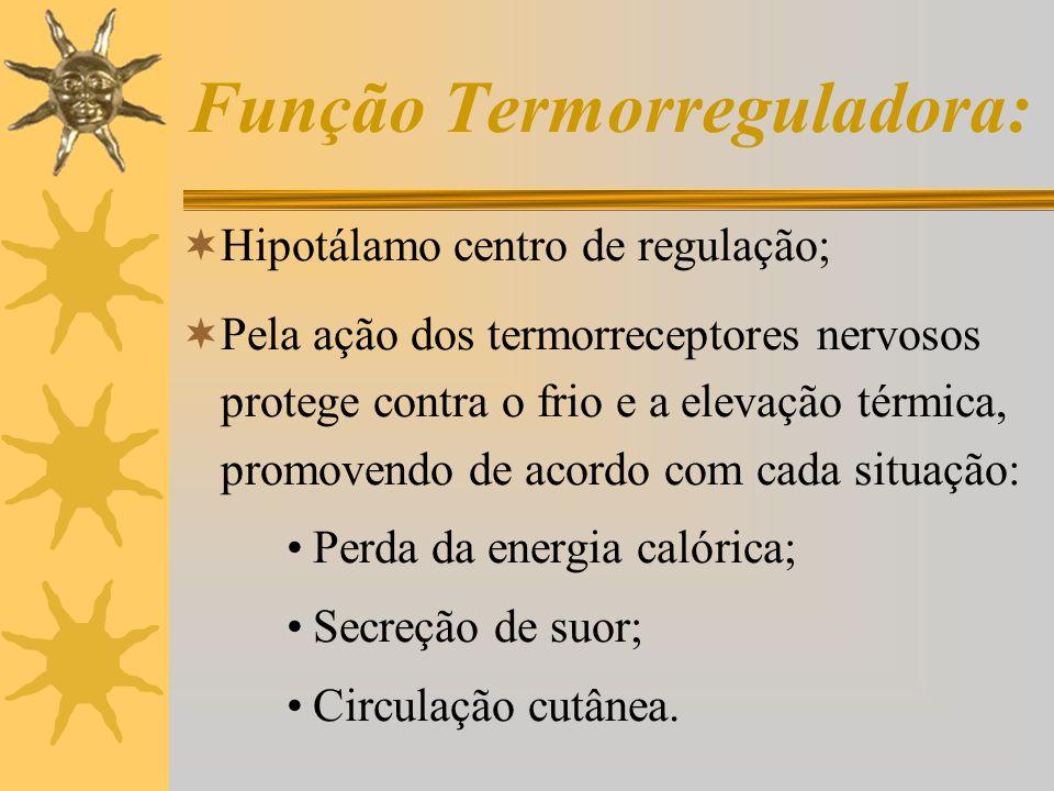 Função Imunitária:  Células de Langerhans;  Protege de vírus, micróbios e bolor;  Resposta inflamatória.
