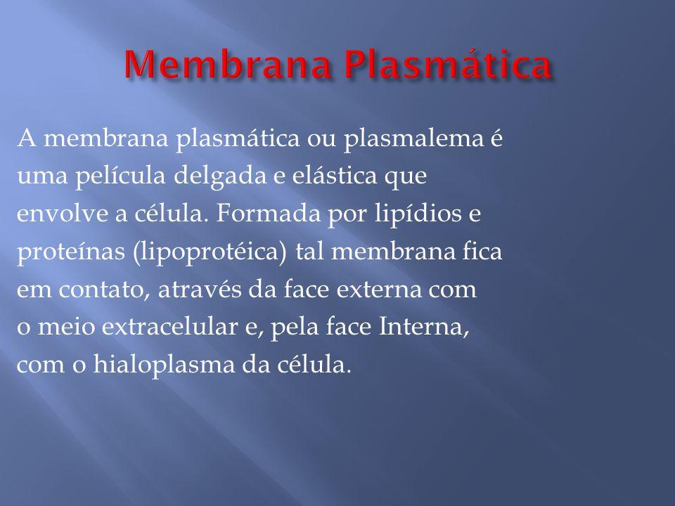 A membrana plasmática ou plasmalema é uma película delgada e elástica que envolve a célula.