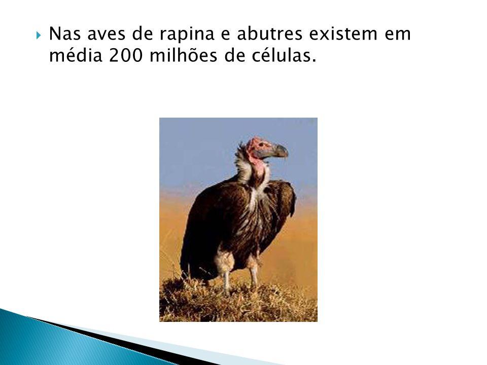  Nas aves de rapina e abutres existem em média 200 milhões de células.