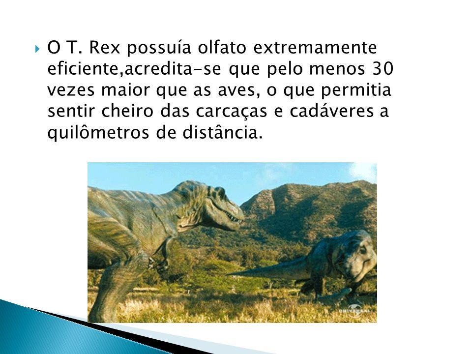  O T. Rex possuía olfato extremamente eficiente,acredita-se que pelo menos 30 vezes maior que as aves, o que permitia sentir cheiro das carcaças e ca