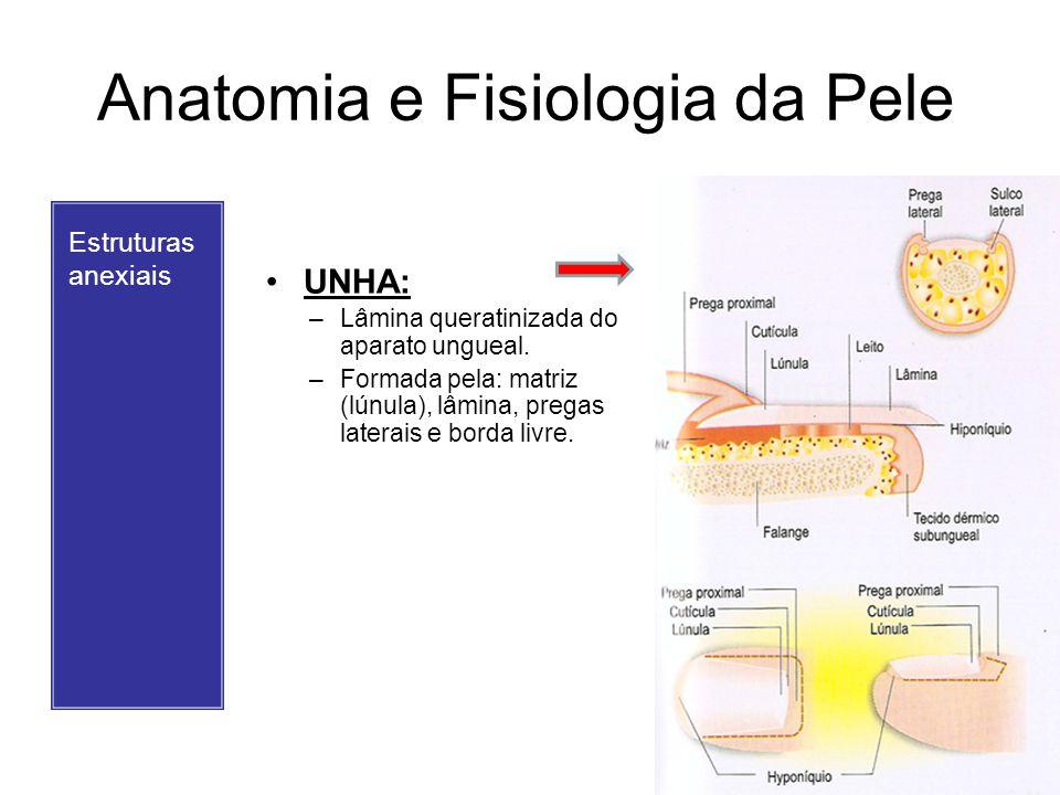 Anatomia e Fisiologia da Pele Estruturas anexiais UNHA: –Lâmina queratinizada do aparato ungueal. –Formada pela: matriz (lúnula), lâmina, pregas later