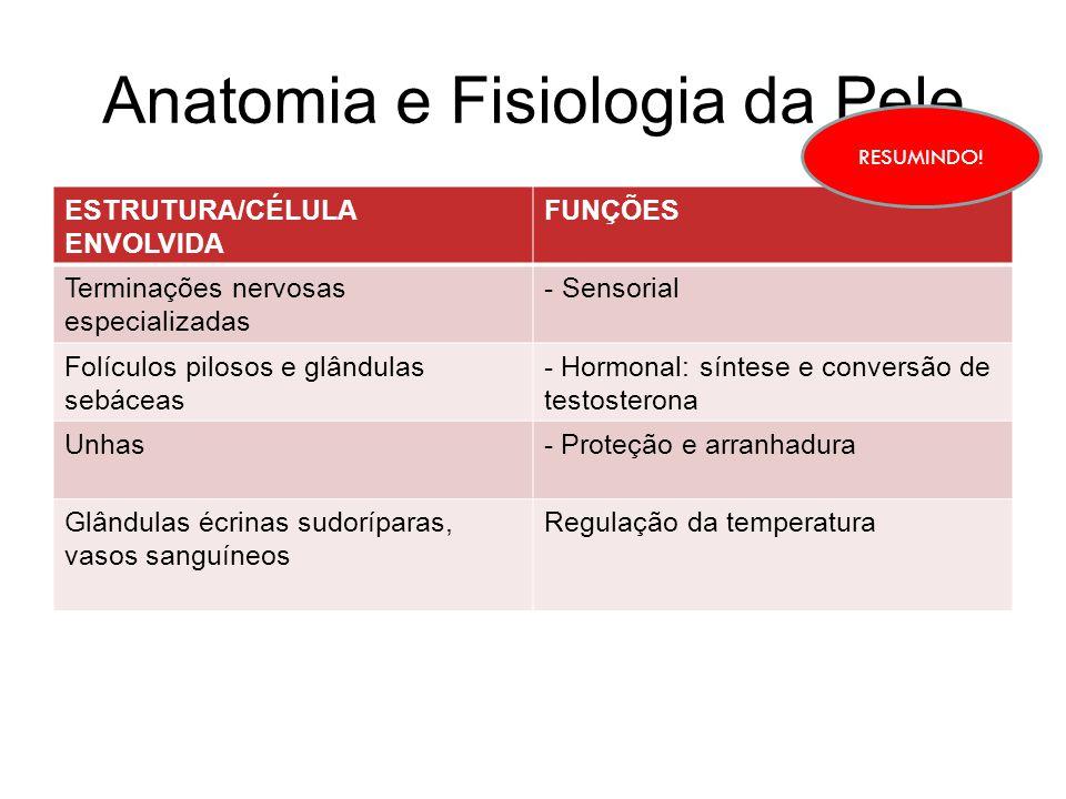 Anatomia e Fisiologia da Pele ESTRUTURA/CÉLULA ENVOLVIDA FUNÇÕES Terminações nervosas especializadas - Sensorial Folículos pilosos e glândulas sebácea