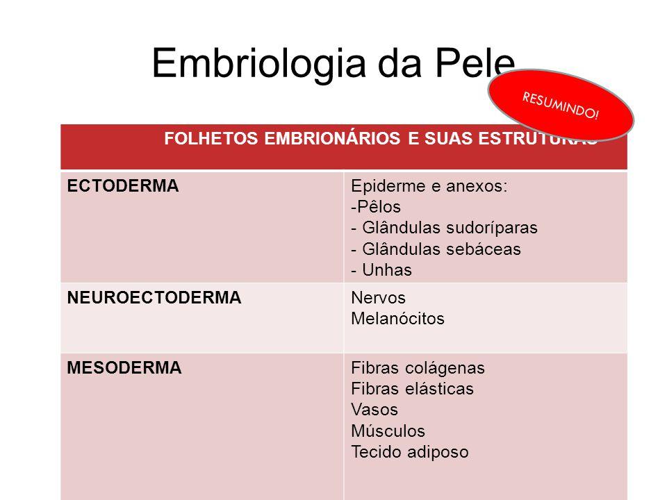 Embriologia da Pele FOLHETOS EMBRIONÁRIOS E SUAS ESTRUTURAS ECTODERMAEpiderme e anexos: -Pêlos - Glândulas sudoríparas - Glândulas sebáceas - Unhas NE