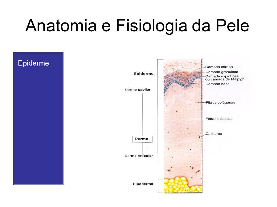 Anatomia e Fisiologia da Pele Epiderme