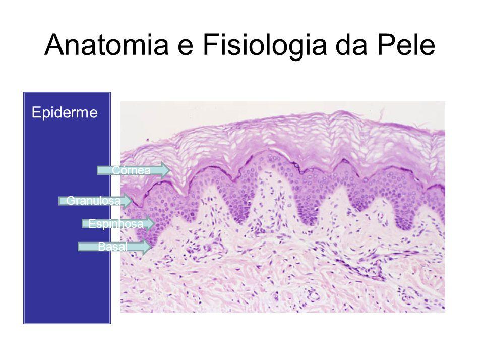 Anatomia e Fisiologia da Pele A epiderme é composta por células não dendríticas e dendríticas: Células não dendríticas – sem prolongamentos –Queratinócito –Célula de Merckel Células dendríticas – com prolongamento –Melanócito –Célula de Langerhans
