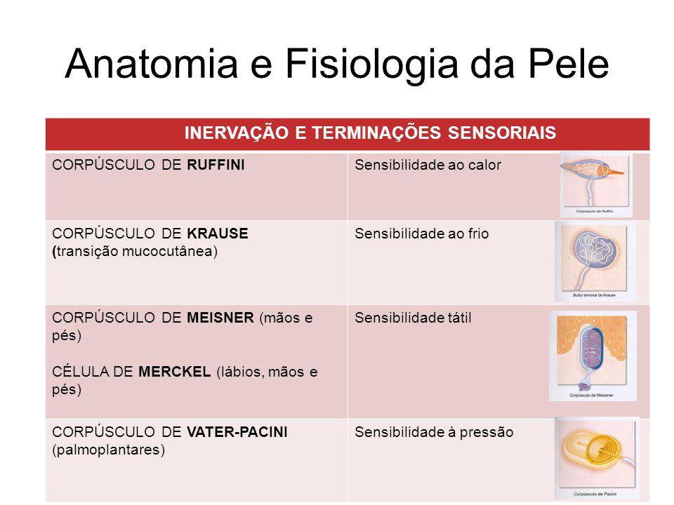 Estruturas anexiais Três fases de desenvolvimento do pêlo (ciclos): ANÁGENAFase anabólica (proliferção- raiz bem negra)) -85% dos pêlos do couro cabeludo - 3 anos CATÁGENAFase catábolismo.
