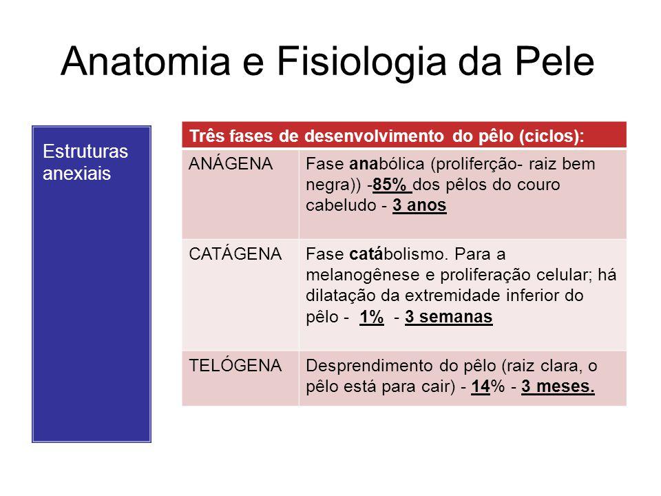 Anatomia e Fisiologia da Pele Estruturas anexiais UNHA: –Lâmina queratinizada do aparato ungueal.