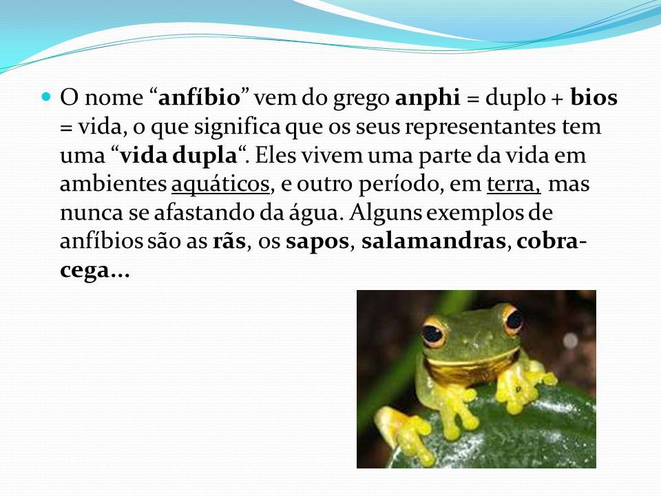 """O nome """"anfíbio"""" vem do grego anphi = duplo + bios = vida, o que significa que os seus representantes tem uma """"vida dupla"""". Eles vivem uma parte da vi"""