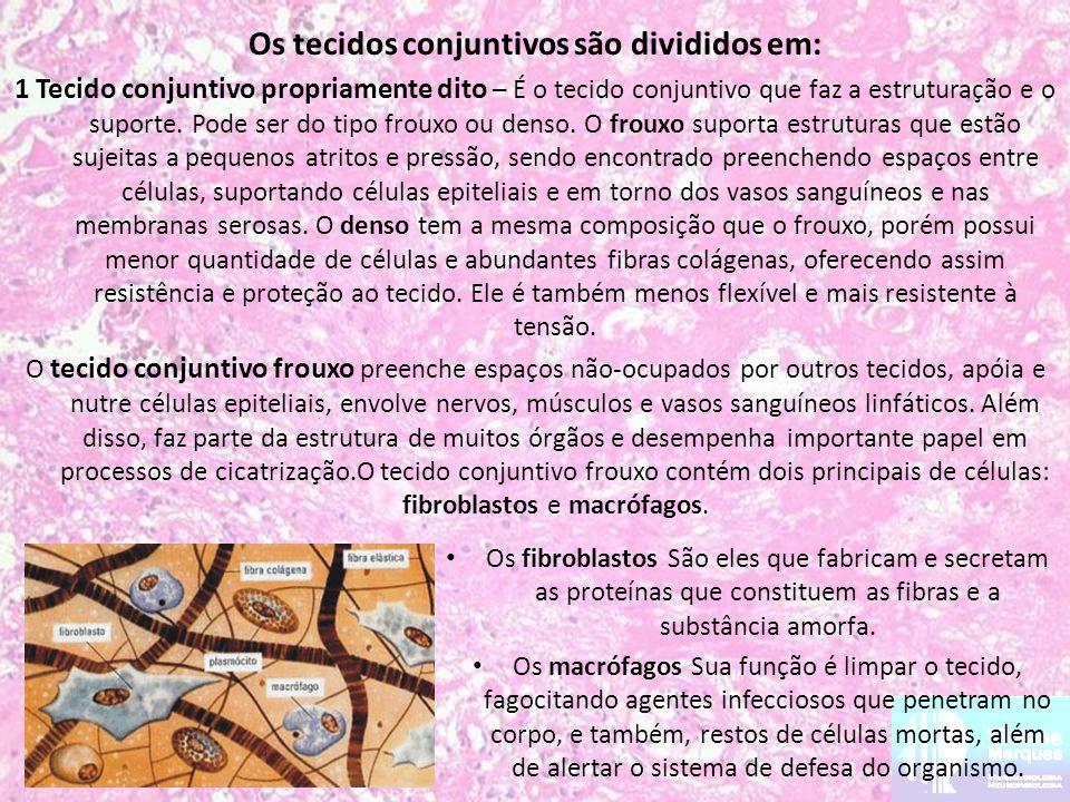 Os tecidos conjuntivos são divididos em: 1 Tecido conjuntivo propriamente dito – É o tecido conjuntivo que faz a estruturação e o suporte. Pode ser do