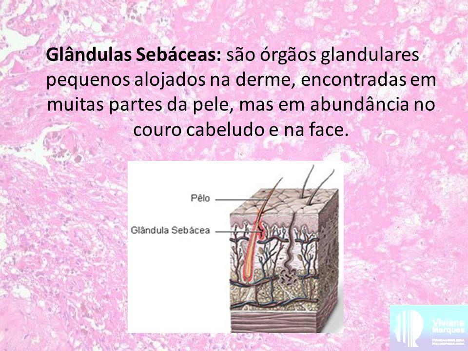 Glândulas Sebáceas: são órgãos glandulares pequenos alojados na derme, encontradas em muitas partes da pele, mas em abundância no couro cabeludo e na