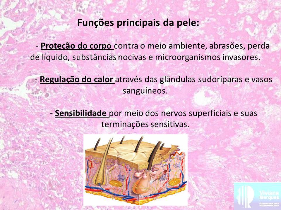 Funções principais da pele: - Proteção do corpo contra o meio ambiente, abrasões, perda de líquido, substâncias nocivas e microorganismos invasores. -