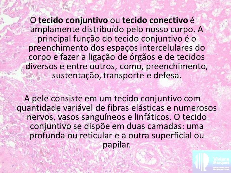 O tecido conjuntivo ou tecido conectivo é amplamente distribuído pelo nosso corpo. A principal função do tecido conjuntivo é o preenchimento dos espaç