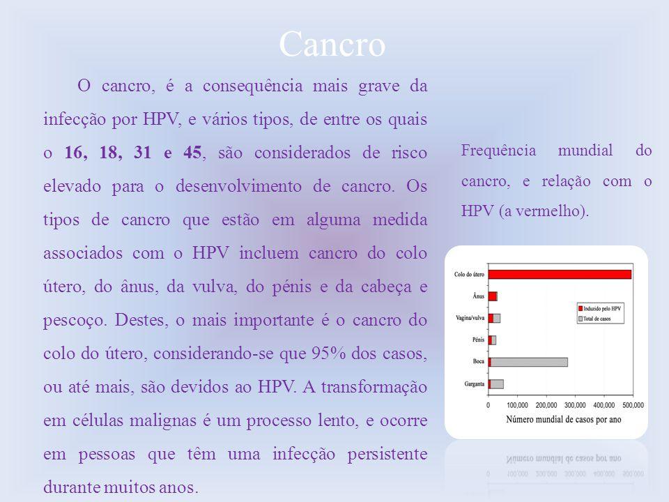 Cancro O cancro, é a consequência mais grave da infecção por HPV, e vários tipos, de entre os quais o 16, 18, 31 e 45, são considerados de risco eleva