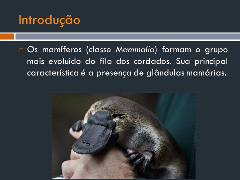  Os mamíferos (classe Mammalia) formam o grupo mais evoluído do filo dos cordados. Sua principal característica é a presença de glândulas mamárias. I