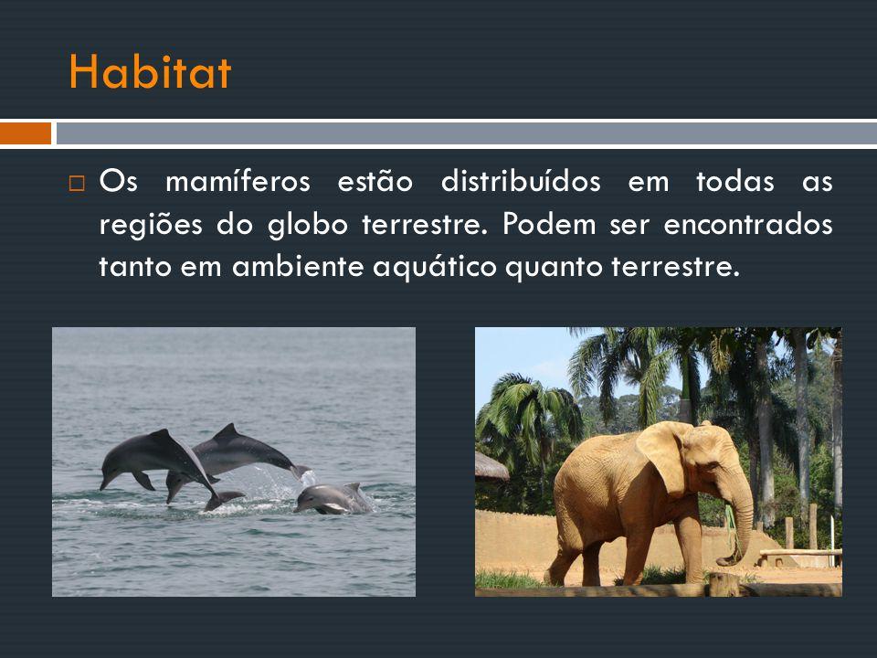 Habitat  Os mamíferos estão distribuídos em todas as regiões do globo terrestre. Podem ser encontrados tanto em ambiente aquático quanto terrestre.