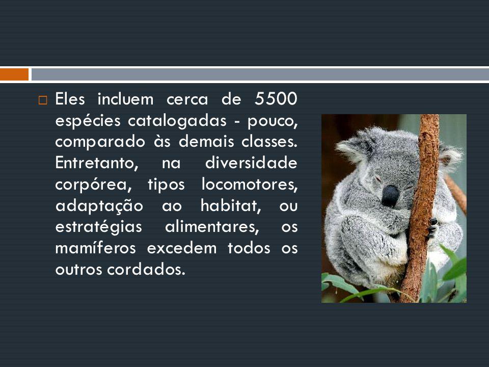  Eles incluem cerca de 5500 espécies catalogadas - pouco, comparado às demais classes. Entretanto, na diversidade corpórea, tipos locomotores, adapta