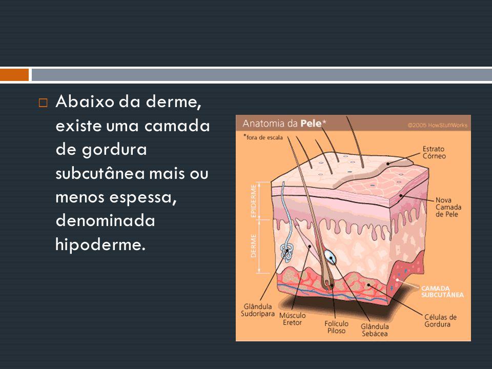  Olfato Nos mamíferos com hábitos diurnos, o bulbo olfatório (área do cérebro relacionada ao olfato) é bastante desenvolvido; já nos primatas ele é pequeno, e, nos cetáceos, quase inexistente.