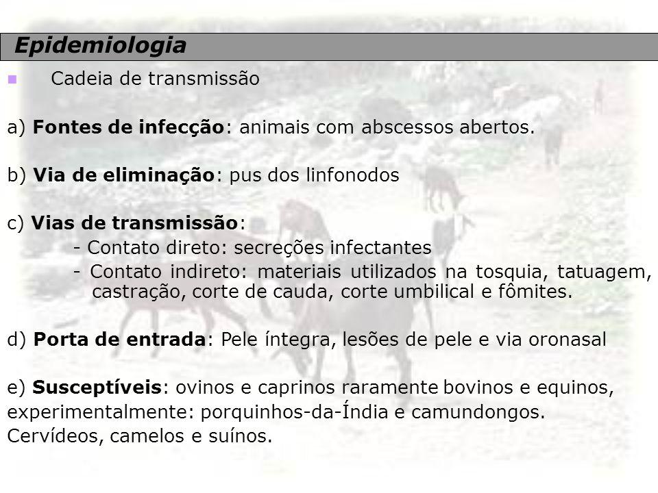 Epidemiologia Cadeia de transmissão a) Fontes de infecção: animais com abscessos abertos. b) Via de eliminação: pus dos linfonodos c) Vias de transmis