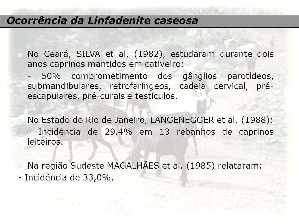 Ocorrência da Linfadenite caseosa No Ceará, SILVA et al. (1982), estudaram durante dois anos caprinos mantidos em cativeiro: - 50% comprometimento dos