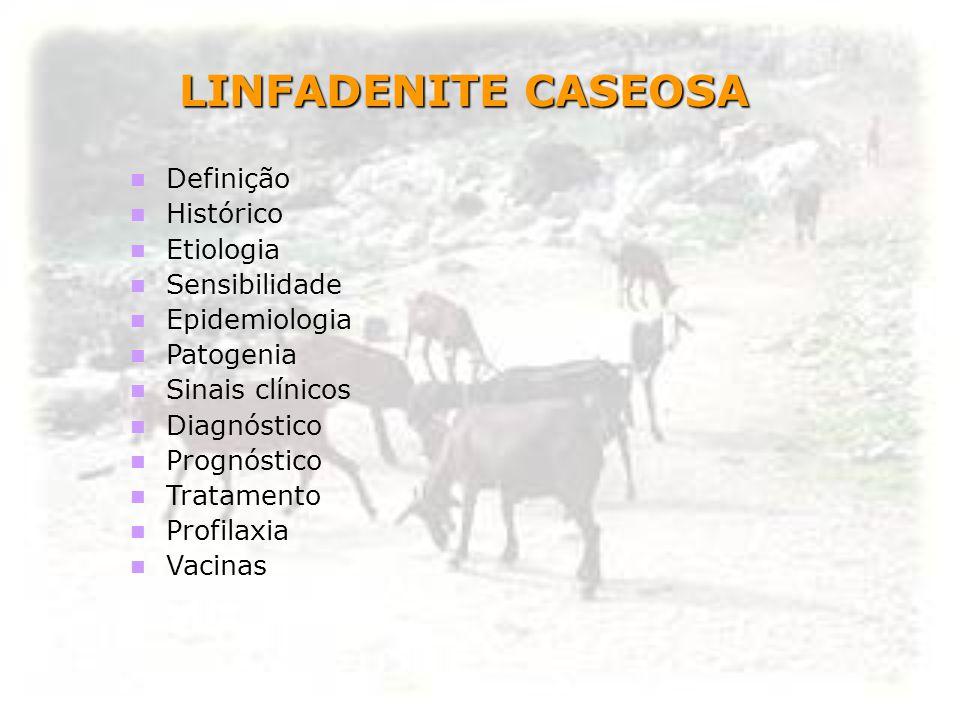 LINFADENITE CASEOSA Definição Histórico Etiologia Sensibilidade Epidemiologia Patogenia Sinais clínicos Diagnóstico Prognóstico Tratamento Profilaxia