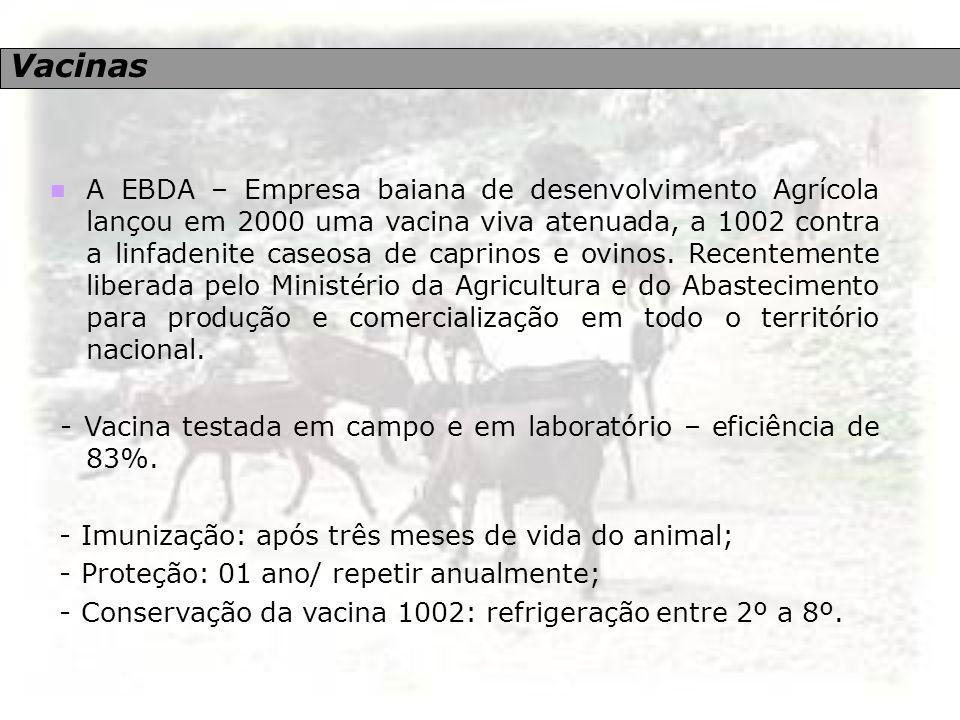 Vacinas A EBDA – Empresa baiana de desenvolvimento Agrícola lançou em 2000 uma vacina viva atenuada, a 1002 contra a linfadenite caseosa de caprinos e
