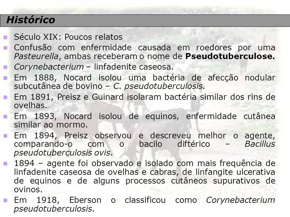 Etiologia Corynebacterium pseudotuberculosis Bactéria intracelular facultativo; Formas cocóide à filamentosa; Gram positiva; Tamanho: 0,5 a 0,6 mm de diâmetro/ 1,0 a 3,0 mm de comp.