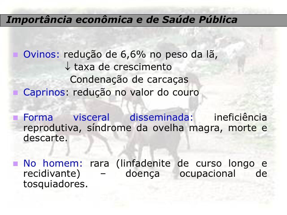 Importância econômica e de Saúde Pública Ovinos: redução de 6,6% no peso da lã,  taxa de crescimento Condenação de carcaças Caprinos: redução no valo