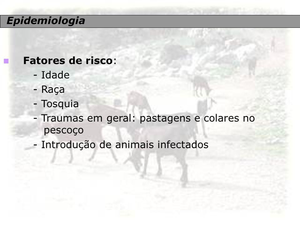 Epidemiologia Fatores de risco: - Idade - Raça - Tosquia - Traumas em geral: pastagens e colares no pescoço - Introdução de animais infectados