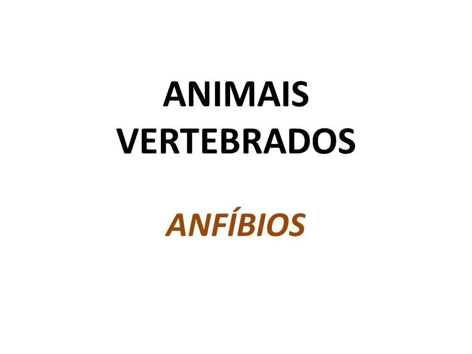ANIMAIS VERTEBRADOS ANFÍBIOS
