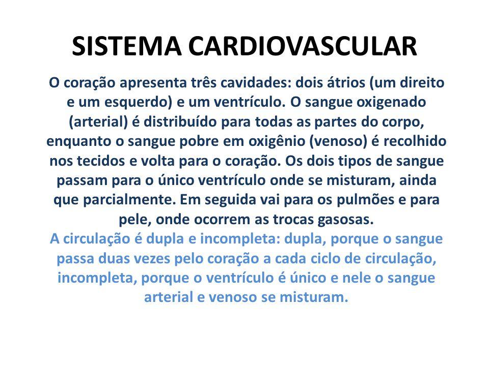 SISTEMA CARDIOVASCULAR O coração apresenta três cavidades: dois átrios (um direito e um esquerdo) e um ventrículo. O sangue oxigenado (arterial) é dis