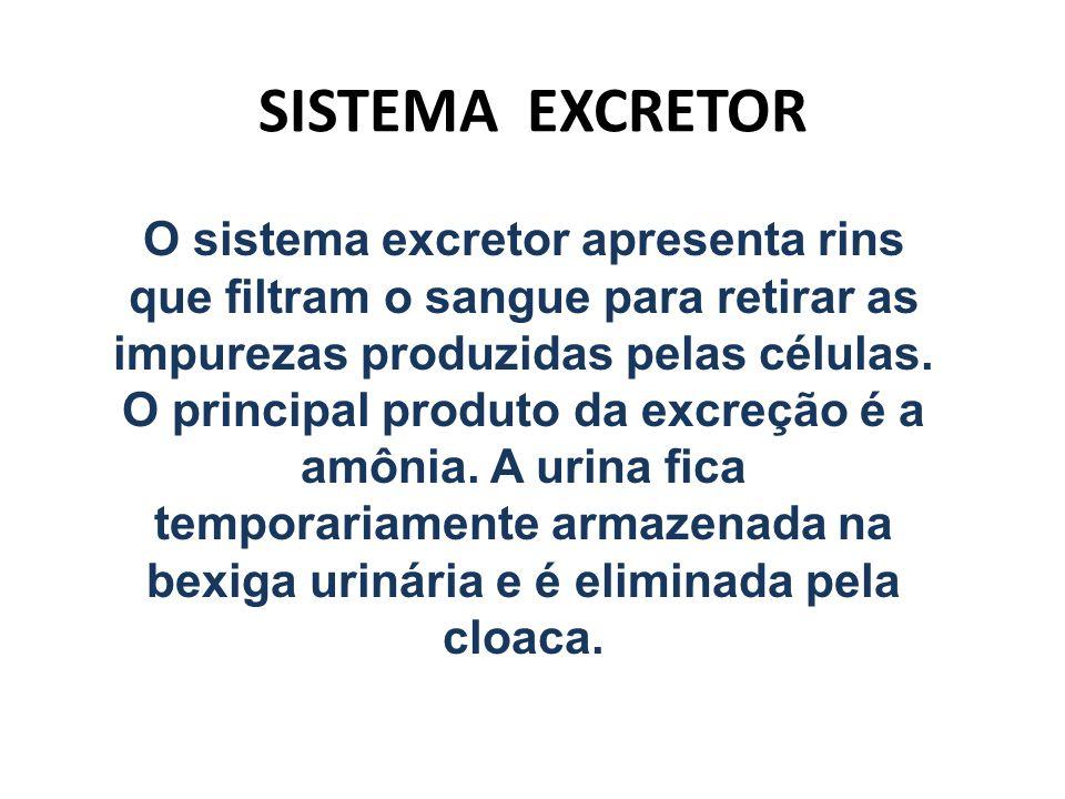 SISTEMA EXCRETOR O sistema excretor apresenta rins que filtram o sangue para retirar as impurezas produzidas pelas células. O principal produto da exc
