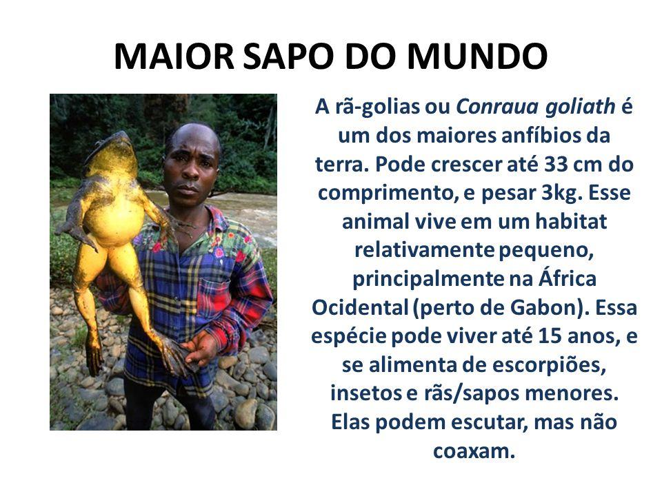 MAIOR SAPO DO MUNDO A rã-golias ou Conraua goliath é um dos maiores anfíbios da terra. Pode crescer até 33 cm do comprimento, e pesar 3kg. Esse animal