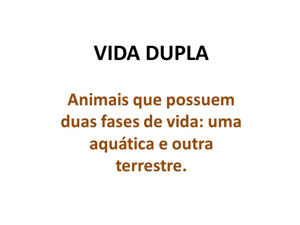 VIDA DUPLA Animais que possuem duas fases de vida: uma aquática e outra terrestre.