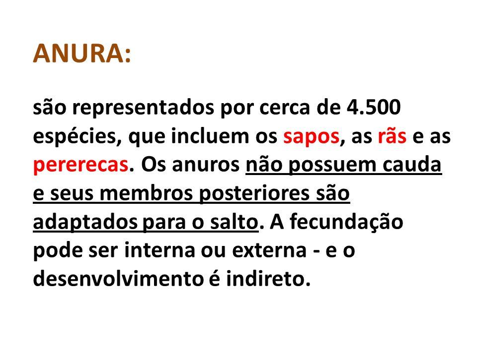 ANURA: são representados por cerca de 4.500 espécies, que incluem os sapos, as rãs e as pererecas.