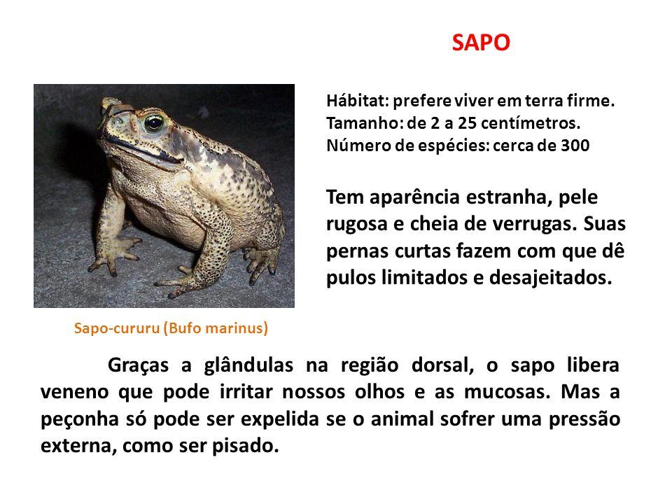 SAPO Hábitat: prefere viver em terra firme.Tamanho: de 2 a 25 centímetros.